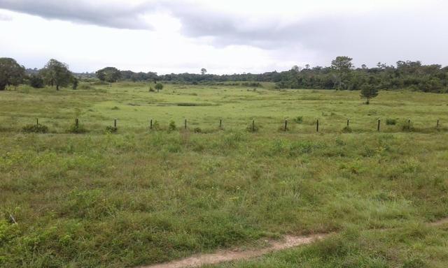 Fazenda em Roraima -São Luiz - Foto 7