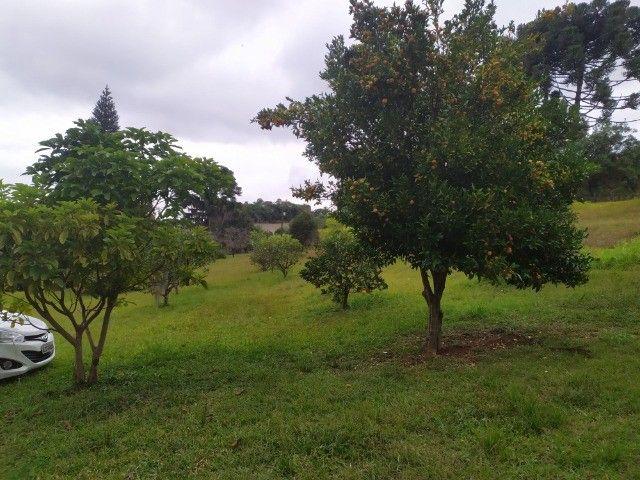 Chácara Araucária Estrada de Roça Nova Tomaz coelho - Foto 8
