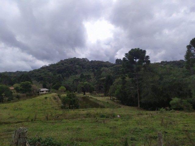 Chácara Araucária Estrada de Roça Nova Tomaz coelho - Foto 10