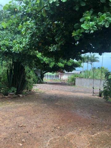 Chácara com 3 dormitórios à venda, 10000 m² por R$ 910.000,00 - Marialva - Marialva/PR - Foto 10