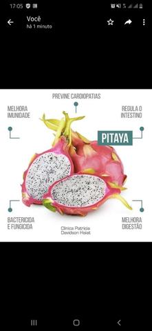 Ainda temos pitayas para vende - Foto 3