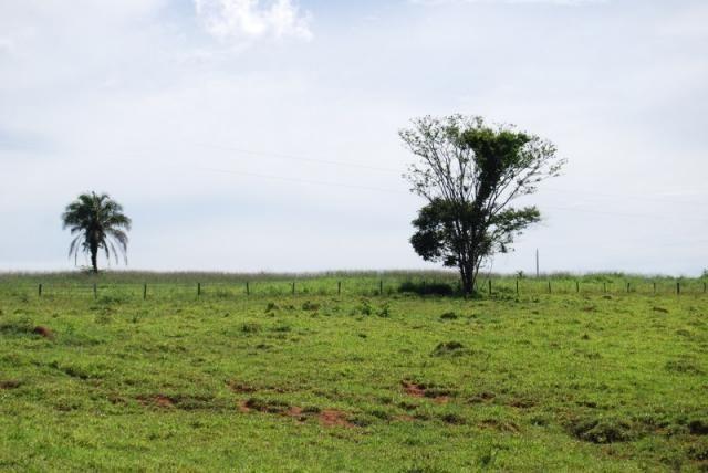 Fazenda com 12 alqueires em Terezópolis-GO  - Foto 17