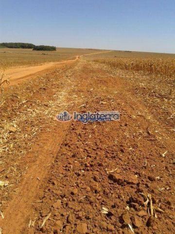 Fazenda à venda, 1817,07 alq. por r$ 36.790.000 - centro - diamantino/mt