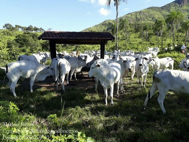 Fazenda em Niquelandia! - Foto 11
