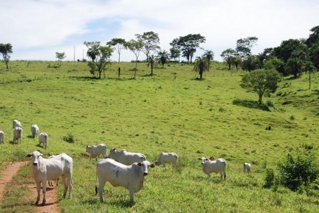 Fazenda com 12 alqueires em Terezópolis-GO  - Foto 15