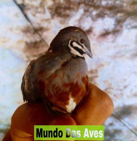 Criatório Mundo Das Aves - Foto 6
