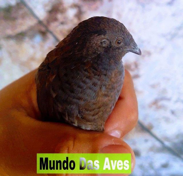 Criatório Mundo Das Aves - Foto 2
