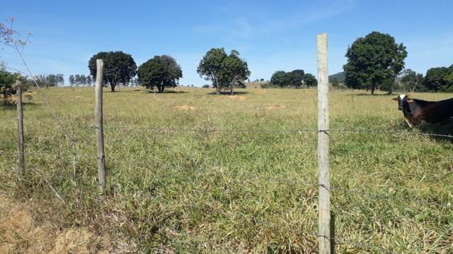 9 hectares terra região belo oriente - Foto 3