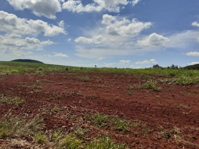 8271   Fazenda à venda em ZONA RURAL, Ivailandia - Foto 5