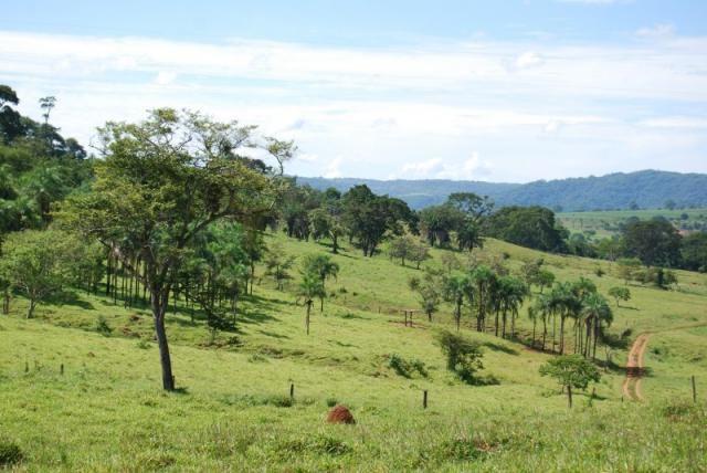 Fazenda com 12 alqueires em Terezópolis-GO  - Foto 18