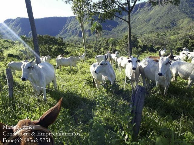 Fazenda em Niquelandia! - Foto 12