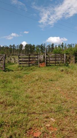 Vendo ou alugo área de pastagem 15.5 alqueires - Foto 5