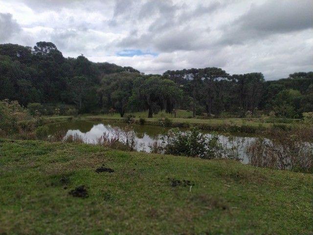 Chácara Araucária Estrada de Roça Nova Tomaz coelho - Foto 7