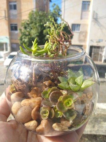 Mini Jardins/ arranjos e terrários - Foto 4