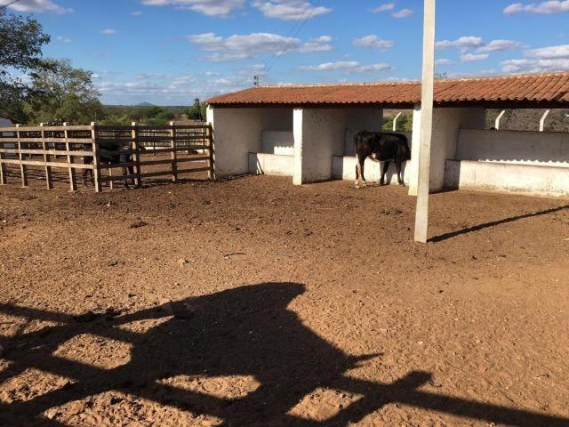 Ótima propriedade de 377 hectares,em Jataúba-PE, por apenas R$ 650 mil - Foto 13