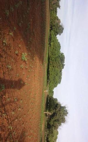 Propiedade 64 hectares - Foto 5