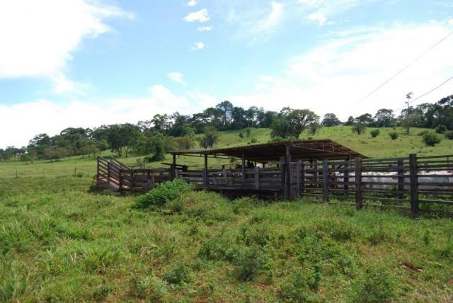 Fazenda com 12 alqueires em Terezópolis-GO  - Foto 10