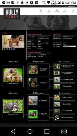 Padreador american bullly - Foto 2