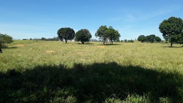 9 hectares terra região belo oriente
