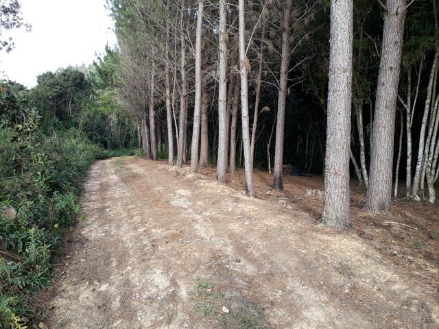 Urgente!!!Torro terreno proximo do asfalto br 116 1km - Foto 3
