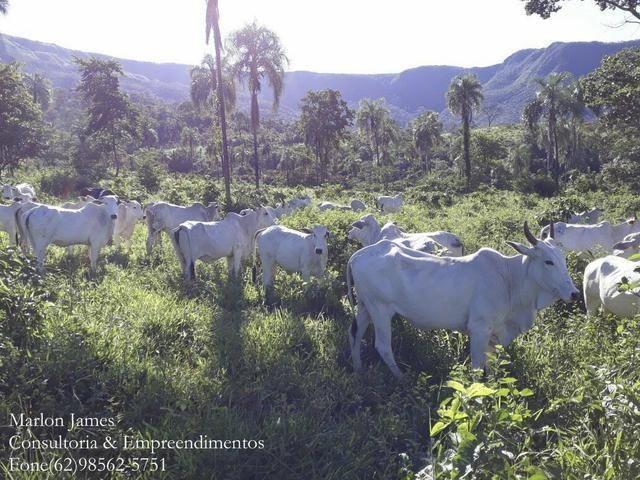 Fazenda em Niquelandia! - Foto 10