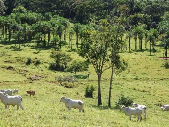 Fazenda com 12 alqueires em Terezópolis-GO  - Foto 2