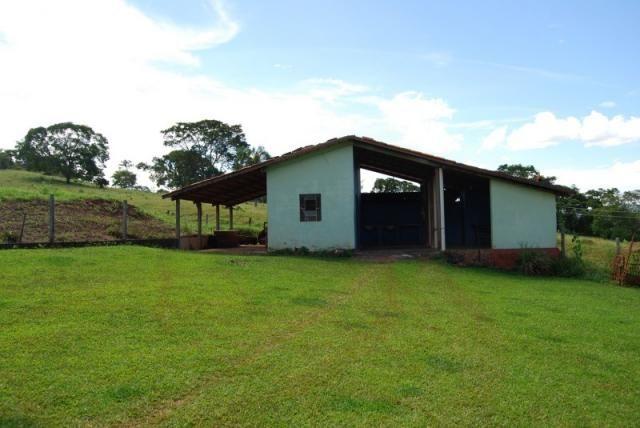 Fazenda com 12 alqueires em Terezópolis-GO  - Foto 5