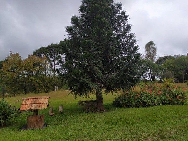 Chácara Araucária Estrada de Roça Nova Tomaz coelho - Foto 11