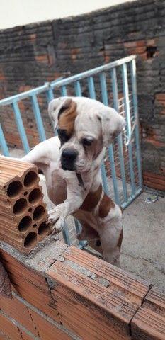 Cachorro box - Foto 2