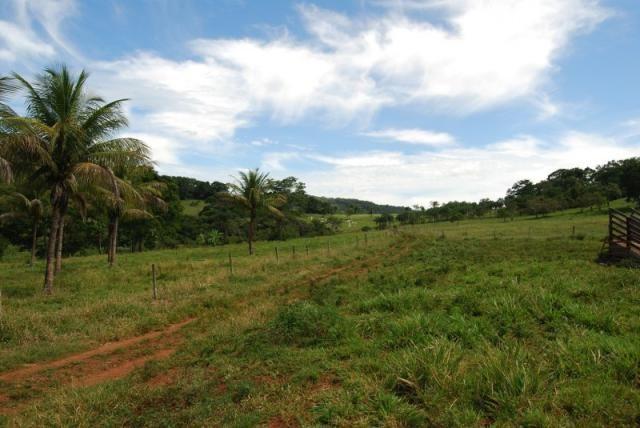 Fazenda com 12 alqueires em Terezópolis-GO  - Foto 9