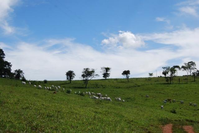 Fazenda com 12 alqueires em Terezópolis-GO  - Foto 11