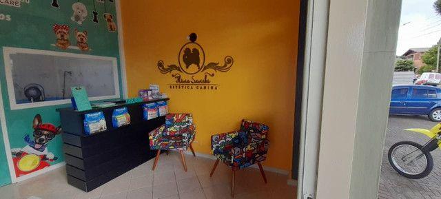 Vendo Banho e Tosa Completo em Canela RS!!! Oportunidade!! - Foto 5