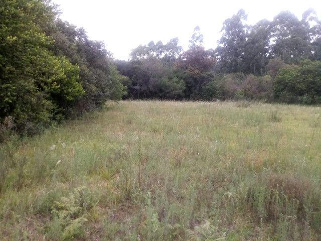 2 hectares! Sonho de Sitio! - Foto 4