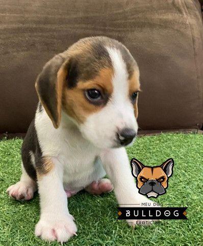 Beagle Macho Tricolor - Foto 4