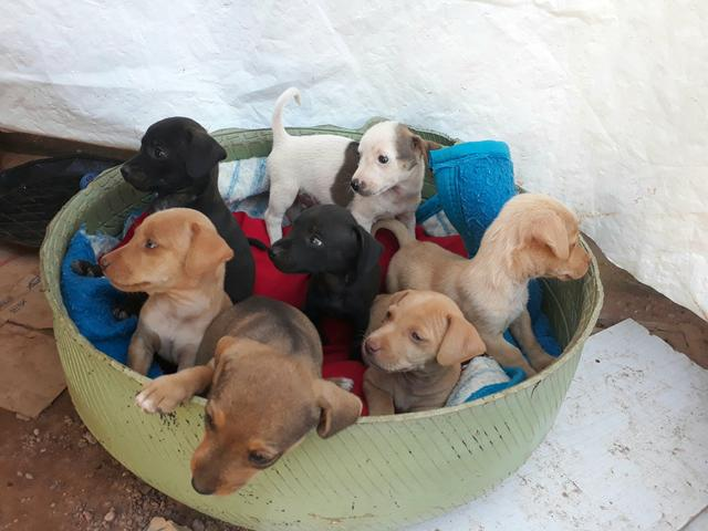 Doa se 7 filhotes adoção responsável!