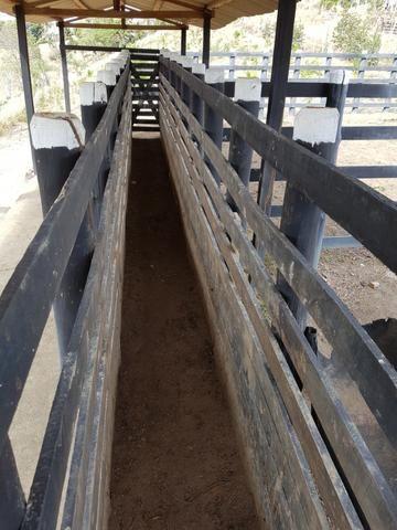 Fazenda ( Vendo ou Troco ) Propriedade Em Teotônio Vilela-AL - Foto 11