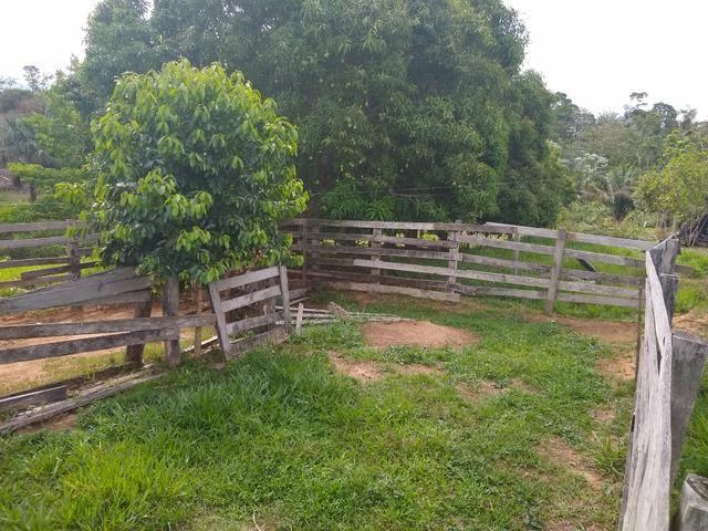 Vende-se chácara após o município do quinari 5 km, projeto Limeira ramal do calango - Foto 4