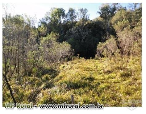 Área de terra com 3 hectares em Fagundes Varela (capela São José) - Foto 9