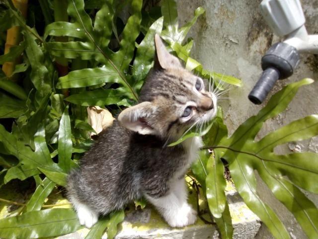 Filhotes fofos de gatos - Foto 4