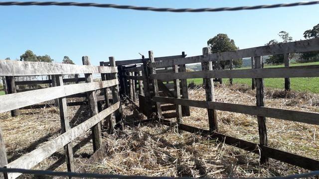 Vende-se ou permuta-se curral ( mangueira) para gado - Foto 6
