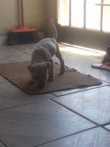 Vendo ou troco em game pitbull Pra sair rápido  - Foto 3