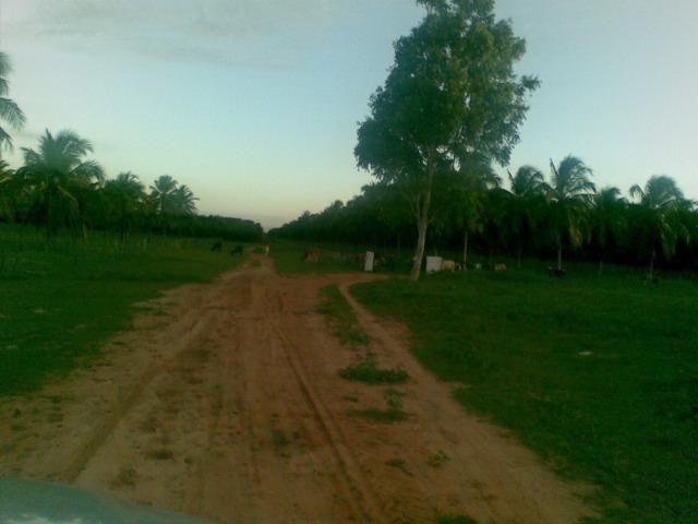 Fazenda 500ha - Foto 13