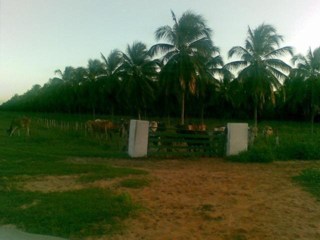 Fazenda 500ha - Foto 14