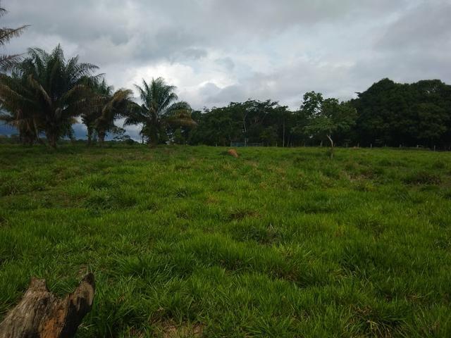 Vende-se chácara após o município do quinari 5 km, projeto Limeira ramal do calango - Foto 3