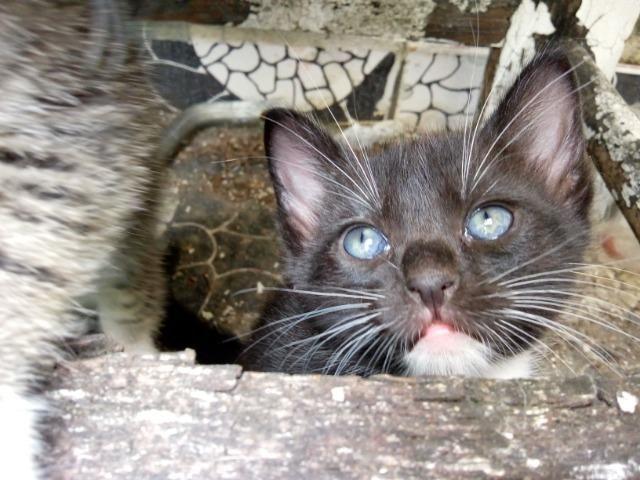 Filhotes fofos de gatos - Foto 5