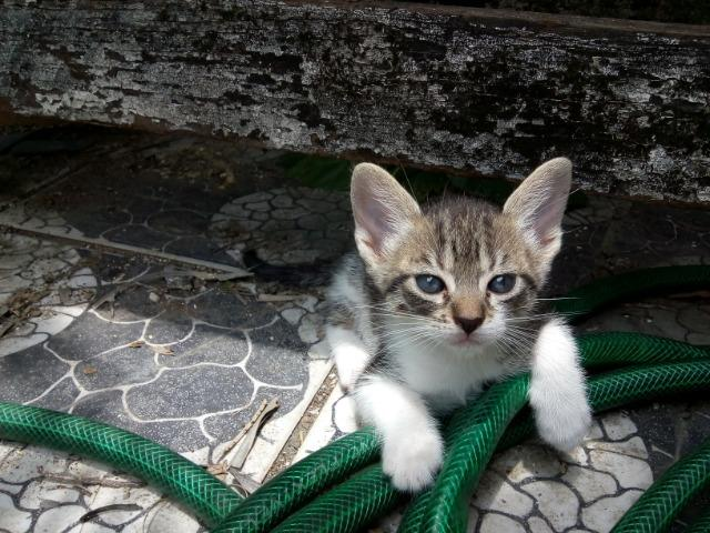 Filhotes fofos de gatos - Foto 2