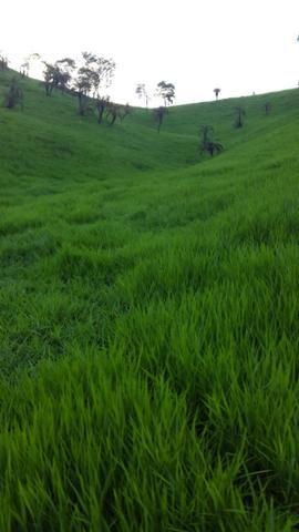 Fazenda ( Vendo ou Troco ) Propriedade Em Teotônio Vilela-AL - Foto 3