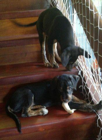 Bebês caninos para adoção - Foto 4