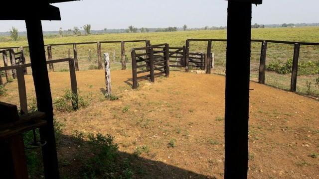 Vendo Linda Fazenda de frente a estrada - a 30 km de porto velho/Ro - Foto 17
