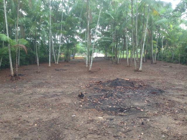Terreno com plantação de açaí - Foto 2